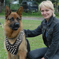 Spiked Dog Harness for German Shepherd