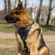 Agitation/Protection Leather Dog Harness-GSD