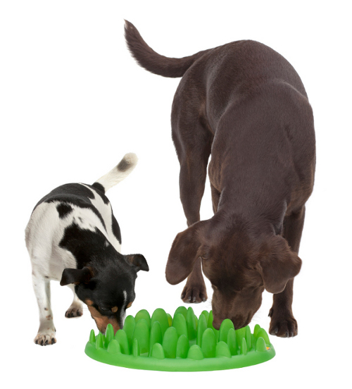 Eco-Plastic Grass Dog Feeder for Two Dogs