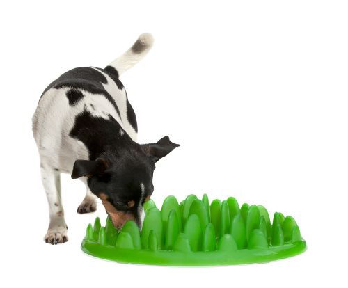 Plastic Grass Dog Plate for Small Breeds