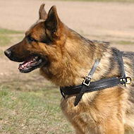 Tracking/Pulling Leather Dog Harness For German shepherd