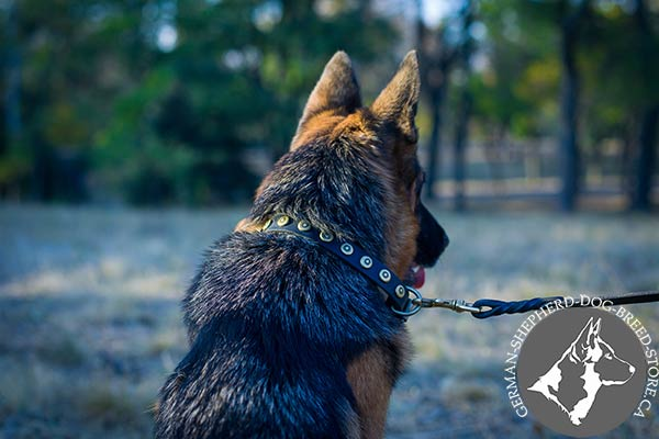 Dainty Leather German Shepherd Collar with Small Circular Studs