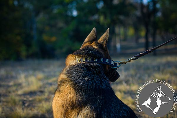 Decorated Leather Dog Collar with Durable Brass Hardware