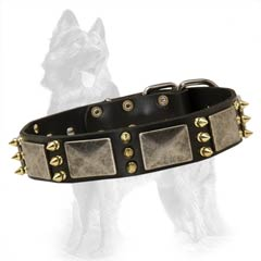 German Shepherd Spiked Leather Collar Decorated with Nickel Plates and Brass Spikes