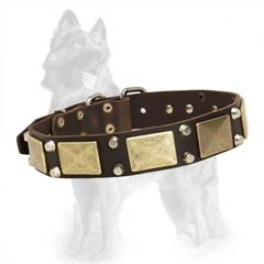 German Shepherd Studded Leather Collar Equipped with Nickel Covered Fittings