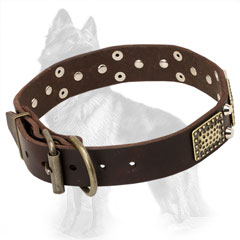 Buckled Leather German Shepherd Collar with Brass Plates and Nickel Pyramids