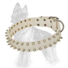 White Leather German Shepherd Collar with Nickel Plated Spikes