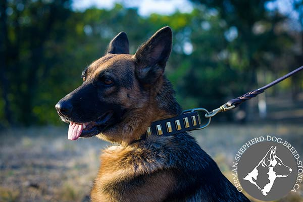 Leather German Shepherd Collar Adorned with Vertical Thin Plates