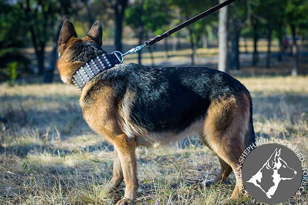 Leather German Shepherd Collar with Handset Cones