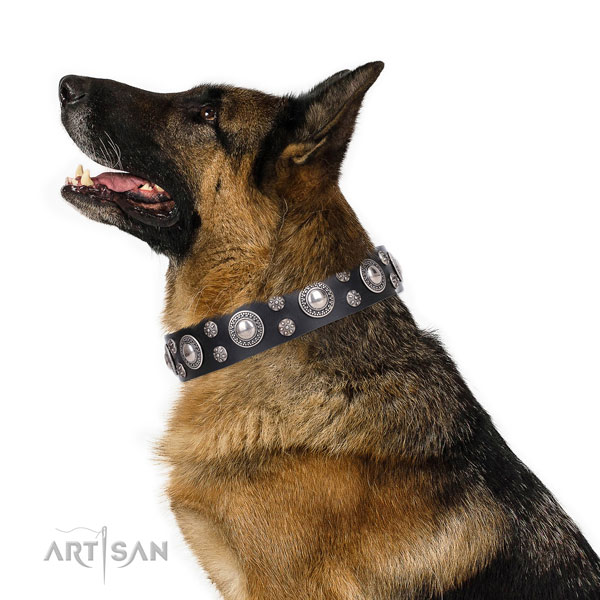 Fancy walking embellished dog collar of reliable genuine leather