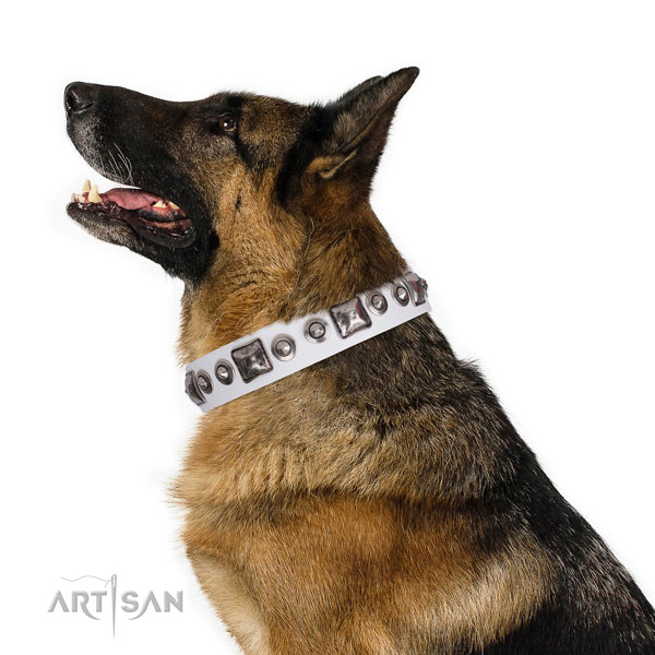 Impressive decorated leather dog collar for daily use