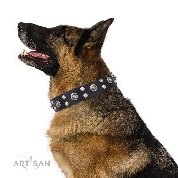 Stylish walking decorated dog collar made of top rate genuine leather