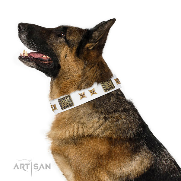 Daily use dog collar with exquisite studs
