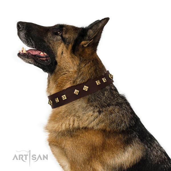 Impressive adornments on fancy walking full grain leather dog collar