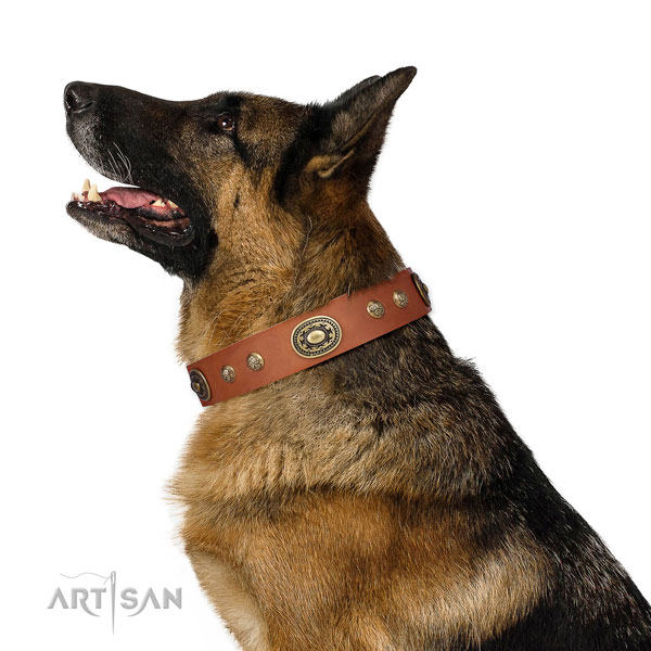 Stunning decorations on everyday walking dog collar