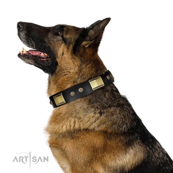 Stylish walking dog collar of genuine leather with inimitable decorations