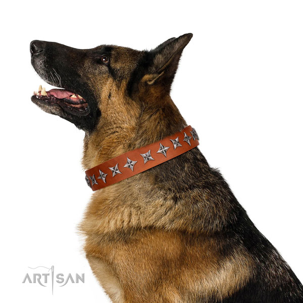Reliable leather dog collar with trendy embellishments
