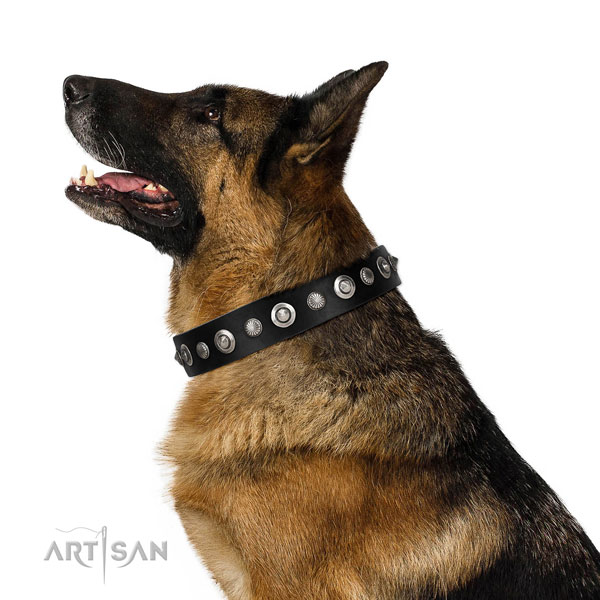 Strong full grain genuine leather dog collar with stylish adornments