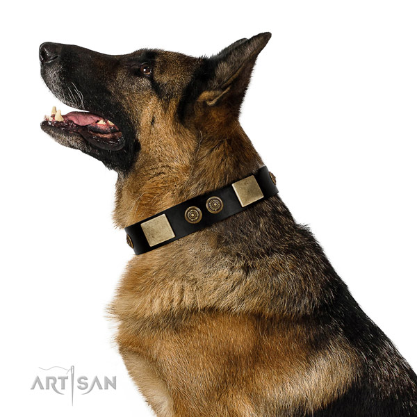 Comfy wearing dog collar of genuine leather with stylish design embellishments