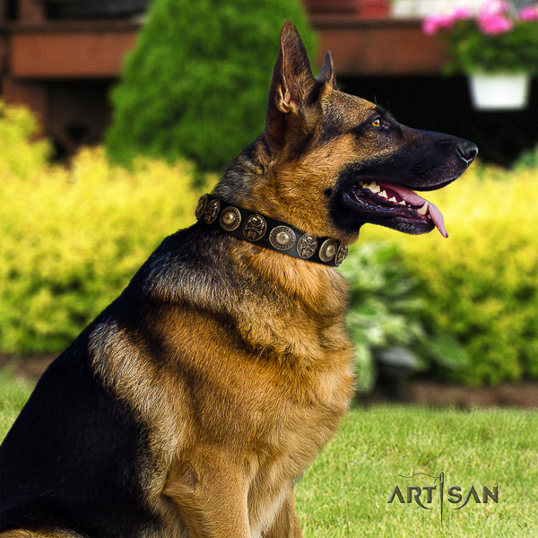 German Shepherd Dog impressive decorated full grain natural leather dog collar for everyday walking
