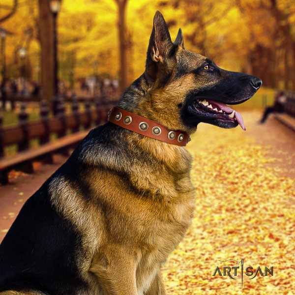 German Shepherd Dog trendy adorned full grain genuine leather dog collar for comfortable wearing