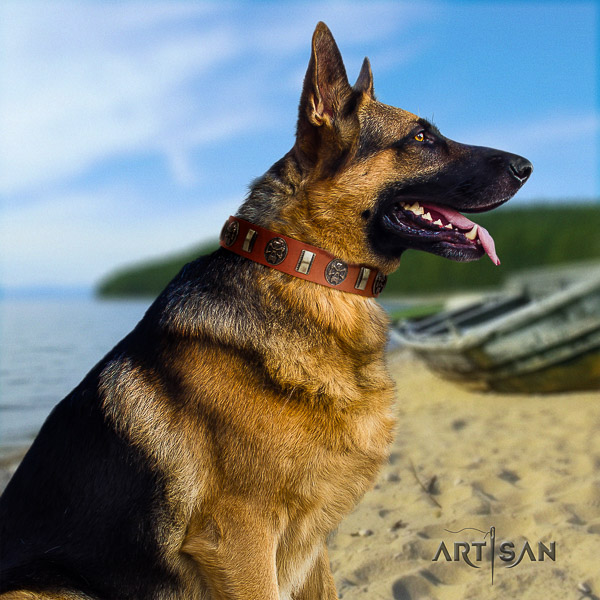German Shepherd Dog significant studded full grain natural leather dog collar for fancy walking