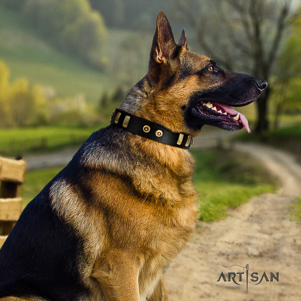 German Shepherd Dog top notch adorned full grain leather dog collar for everyday use