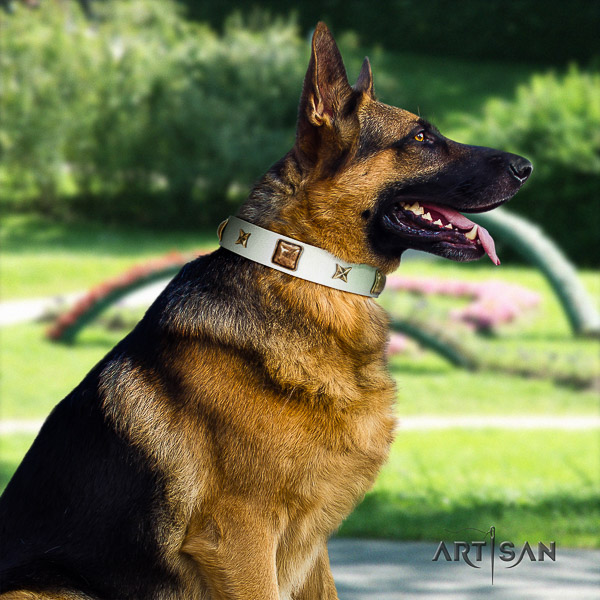German Shepherd Dog significant adorned leather dog collar for everyday walking