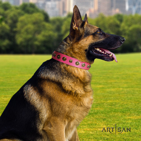 German Shepherd Dog exceptional studded full grain natural leather dog collar for easy wearing