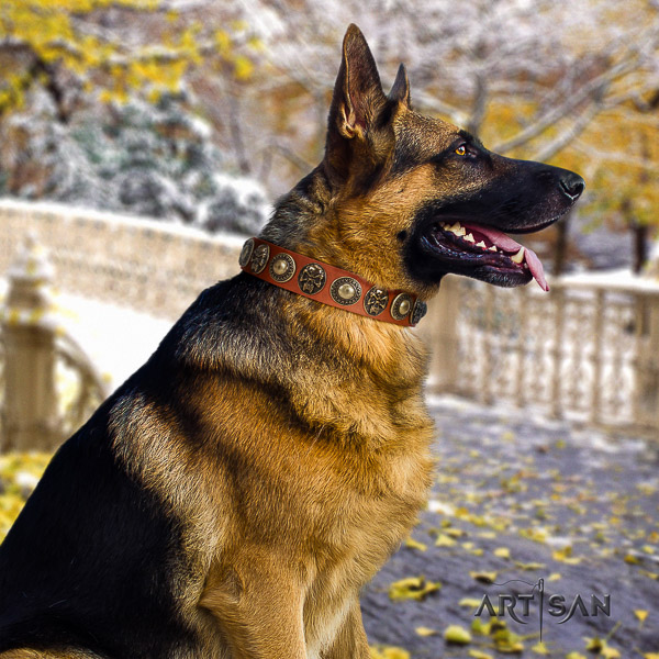 German-Shepherd Dog unique studded full grain natural leather dog collar for comfortable wearing
