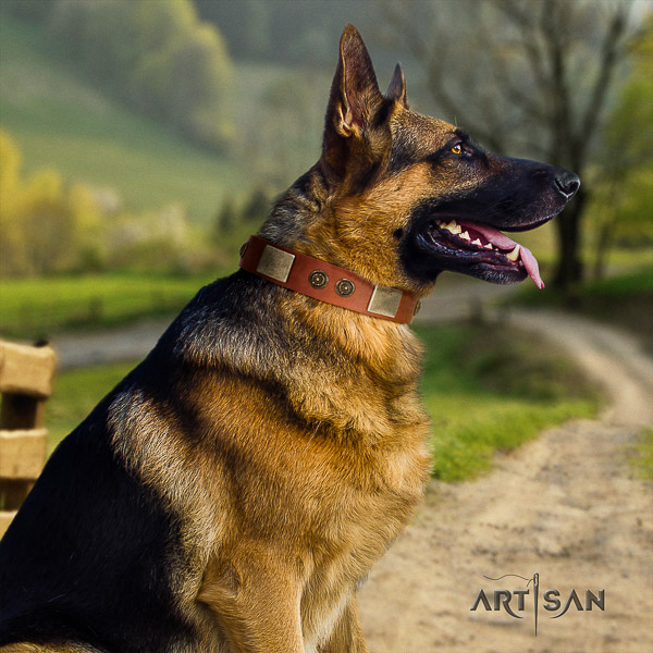 German Shepherd Dog fashionable embellished full grain genuine leather dog collar for walking
