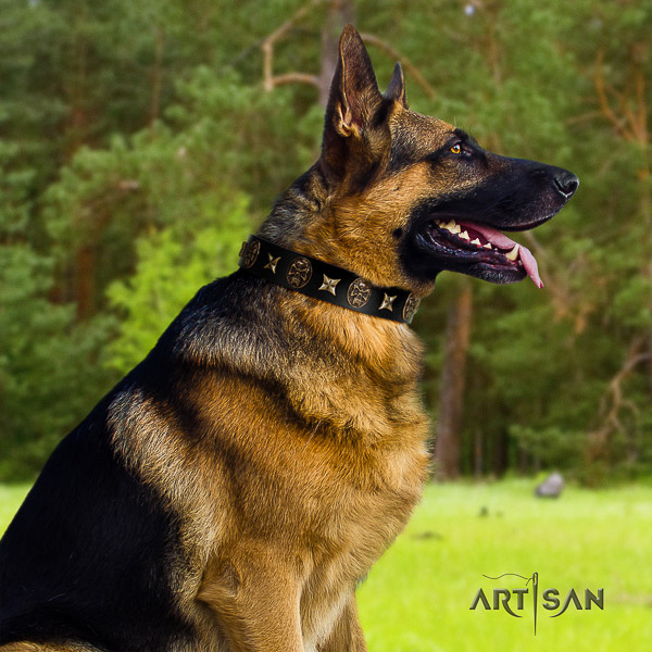 German Shepherd Dog amazing embellished full grain leather dog collar for everyday walking