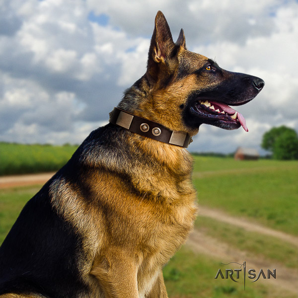 German Shepherd Dog fashionable embellished full grain natural leather dog collar for stylish walking