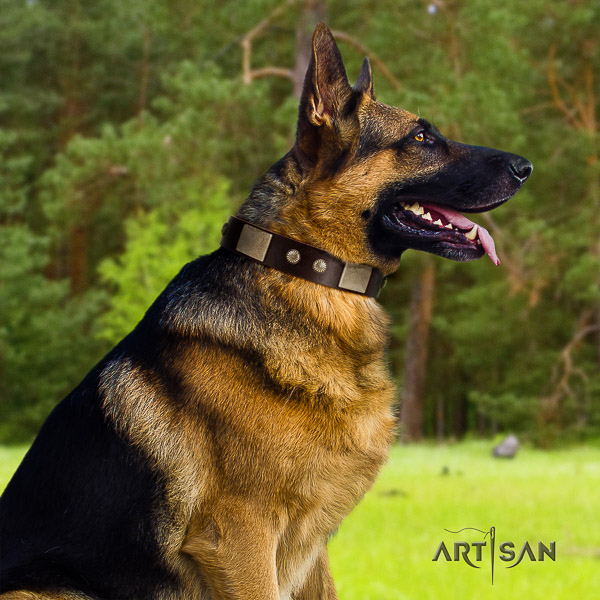 German Shepherd Dog top notch adorned full grain natural leather dog collar for comfortable wearing
