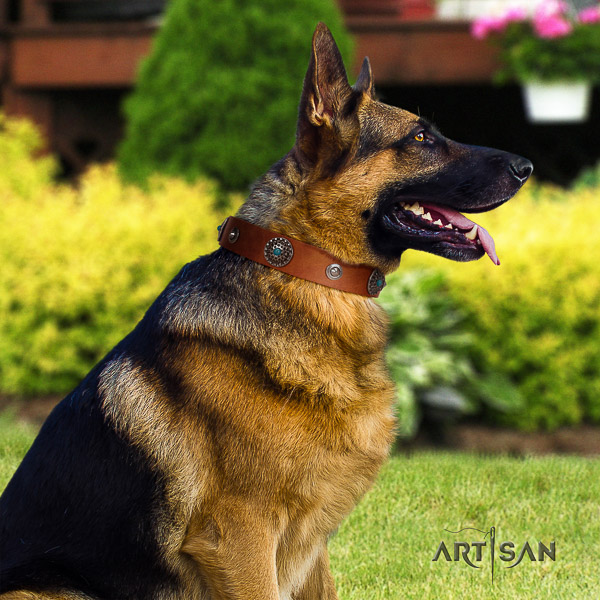 German Shepherd Dog exceptional studded natural leather dog collar for walking