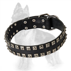 German-Shepherd Leather Dog Collar with Equally Set  Square Studs at Edges