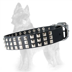 German Shepherd Leather Dog Collar with Nickel Covered  Spikes, Buckle and D-Ring