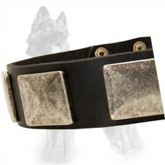 Exclusive Leather German Shepherd Dog Collar Decorated  With Nickel Plates