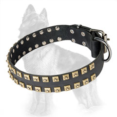 German Shepherd Leather Dog Collar with Equally Set  Brass Square Studs at Edges