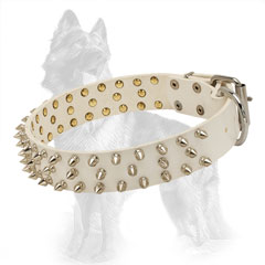 German Shepherd Spiked Leather Dog Collar with Nickel  Covered Fittings