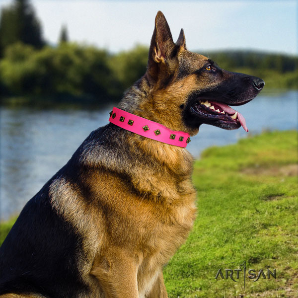 German Shepherd perfect fit collar with stunning studs for your dog