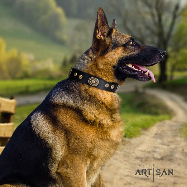 German-Shepherd easy to adjust collar with top notch studs for your doggie