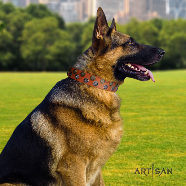 German Shepherd fine quality collar with exquisite embellishments for your four-legged friend