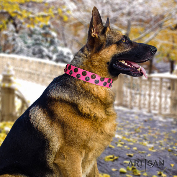 German Shepherd fine quality collar with trendy adornments for your pet