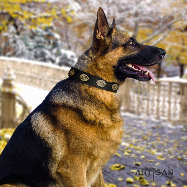 German Shepherd fine quality collar with exceptional decorations for your dog