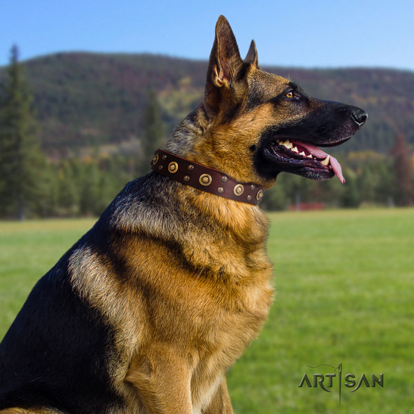 German Shepherd easy wearing collar with amazing studs for your dog