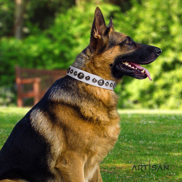 German-Shepherd perfect fit collar with amazing studs for your dog