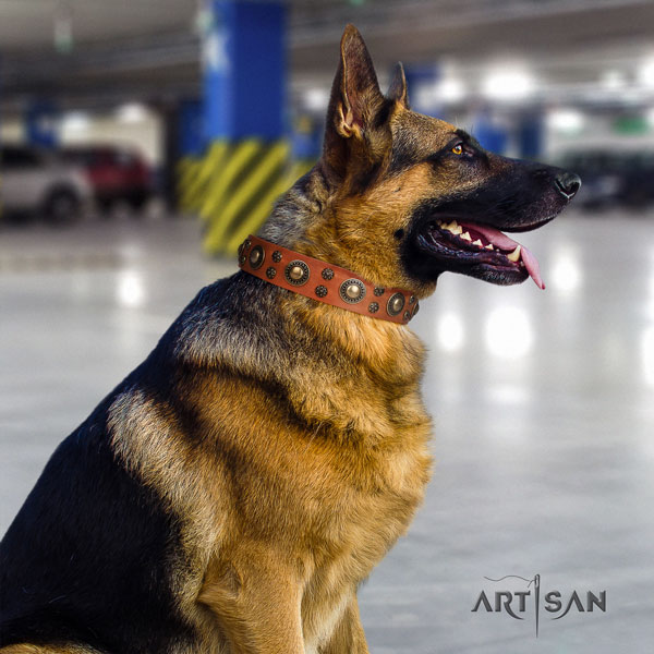 German Shepherd perfect fit collar with stylish embellishments for your pet