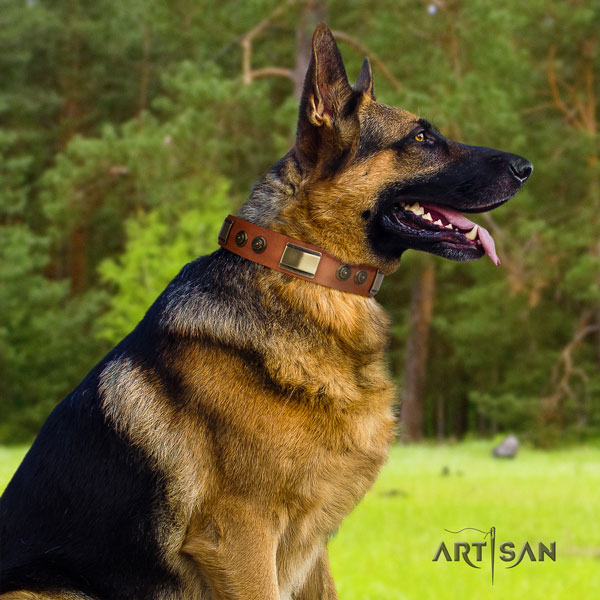 German Shepherd fine quality collar with significant studs for your doggie