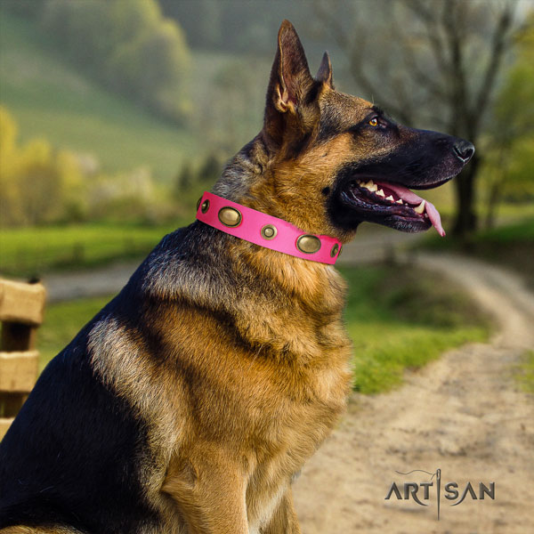 German Shepherd easy to adjust collar with trendy adornments for your canine